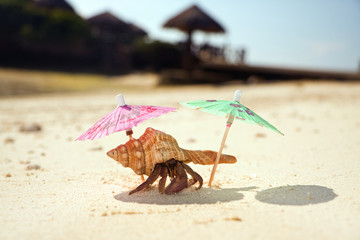 Hermit Crab Beach Bum
