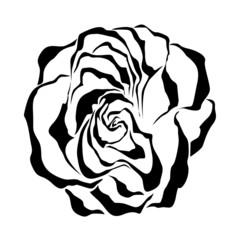 Rose. Black Floral vector element.