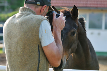 photographer and horse