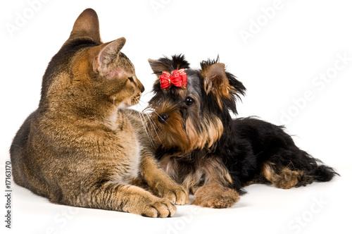 cat ear positions