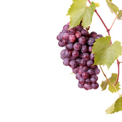 Red grape cluster with leaves