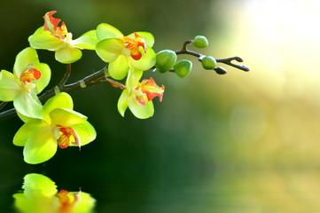 Foto auf Acrylglas Orchideen Orchidee