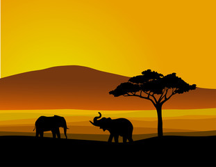 Landscape of wildlife Africa
