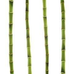 lucky bamboo stems over white