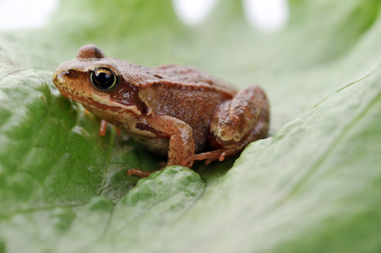 small frog very close up