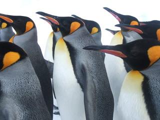 北海道のペンギン