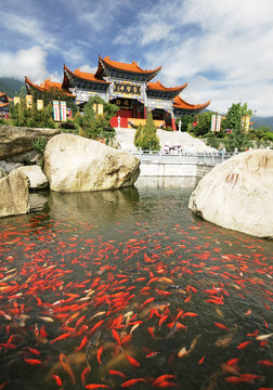 gold fish infront of a Chinese temple