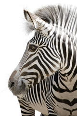 Aluminium Prints Zebra Zebra 001