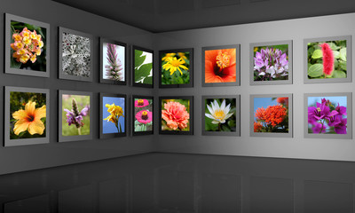 Flower photography gallery exhibition hall concept