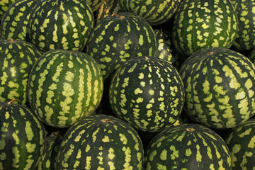 large and green watermelons