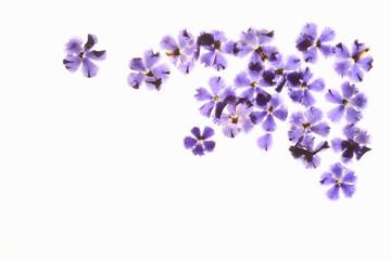 小花の押し花(青)