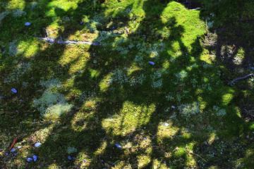 苔と木の影