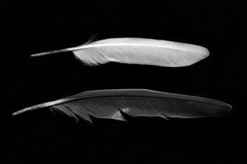 Feathers isolated on black background. Black and white image