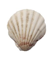 sea shell holiday travel