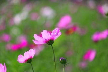風と共に咲きし・・・