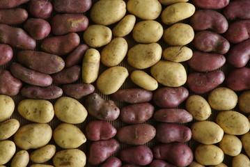 Duo de patates