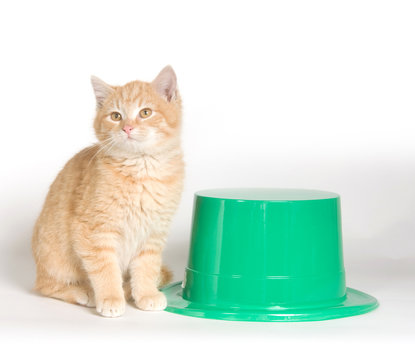 Yellow cat with green hat