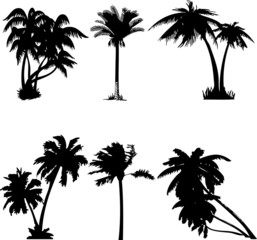 Palm Collage (vector)