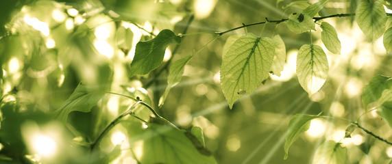 image de feuilles d'arbre et rayons du soleil au printemps