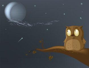 owl the moon a tree night