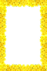 Frame from yellow chrysanthemums.