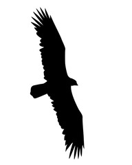 illustration flying birds on white background