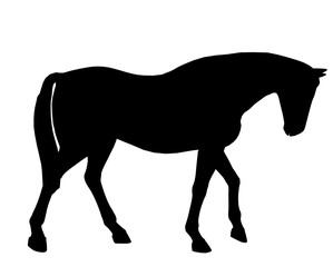 Horse Illustration Silhouette