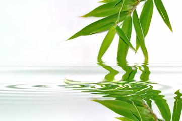 Feuilles de bambou