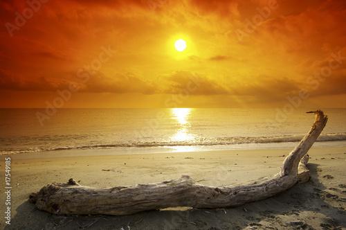bois flott sur plage corse photo libre de droits sur la banque d 39 images image. Black Bedroom Furniture Sets. Home Design Ideas