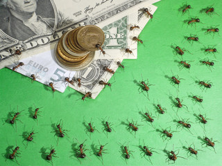 financial crisis in anthill