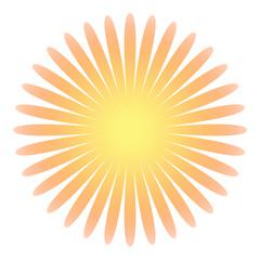Blüte der Sonne