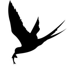 silhouette of the sea bird on white background