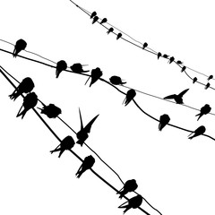 silhouette migrating swallow reposing on electric wire
