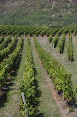 Vigne de Cahors