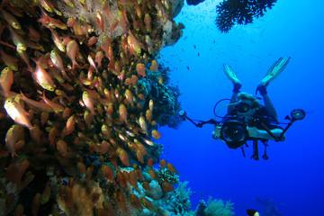 Underwater Photographer explores coral reef