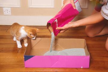 changement de la litière d'un chat roux et blanc