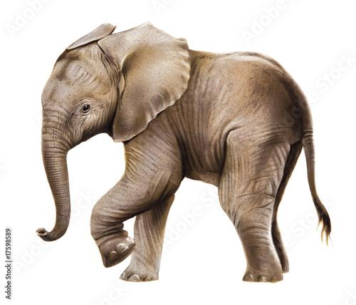 Elefant Stockfotos Und Lizenzfreie Bilder Auf Fotolia Com Bild