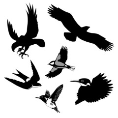 illustration of the birds on white background