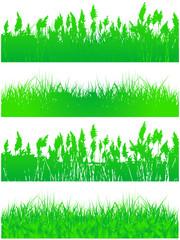 Illustration of grass