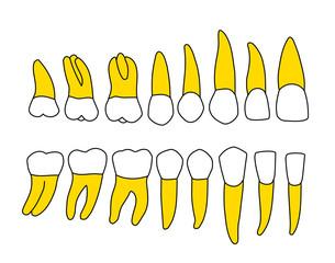 denti arcata