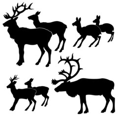 silhouette of the deers on white background