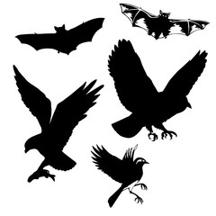 illustration of the birds and bats on white background