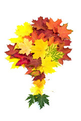 Tree made out of autumn leafs isolated on white