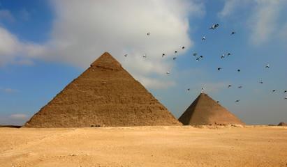 Egypt pyramids and birds