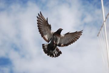 aile et vol