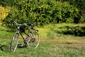 bicycle in orchard