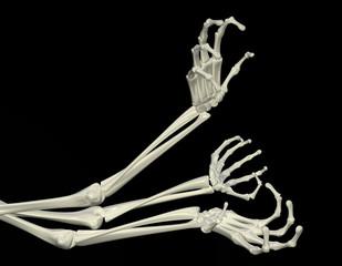 Skeletal Arms