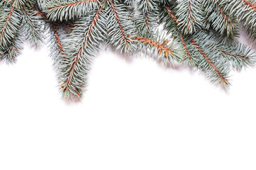 Closeup of fir tree branch isolated on white