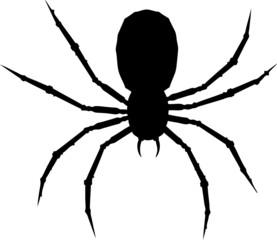 One arachnid.