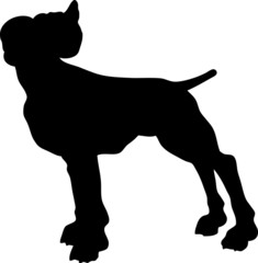 One pitbull.